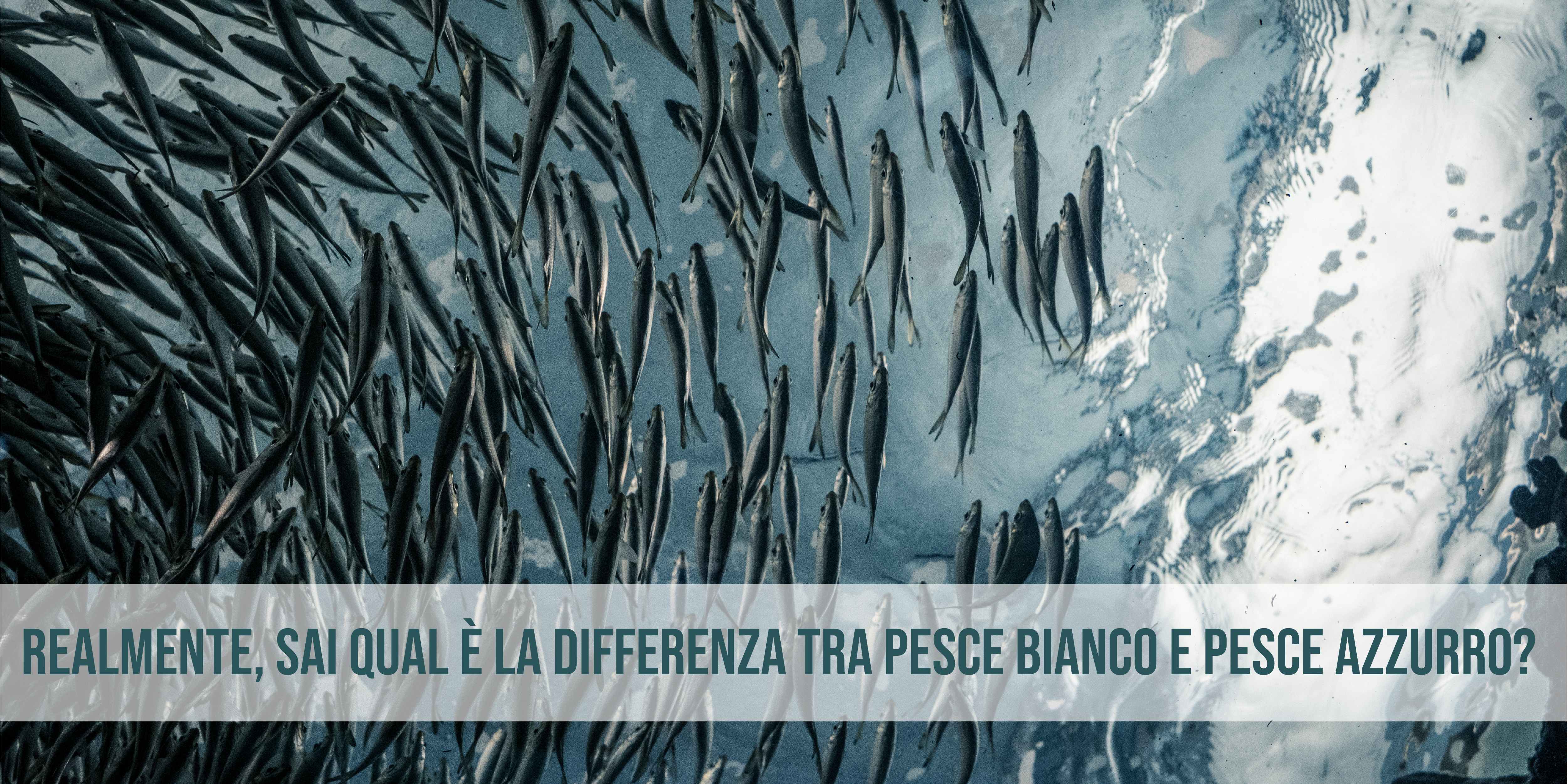 differenza pesce bianco pesce azzurro