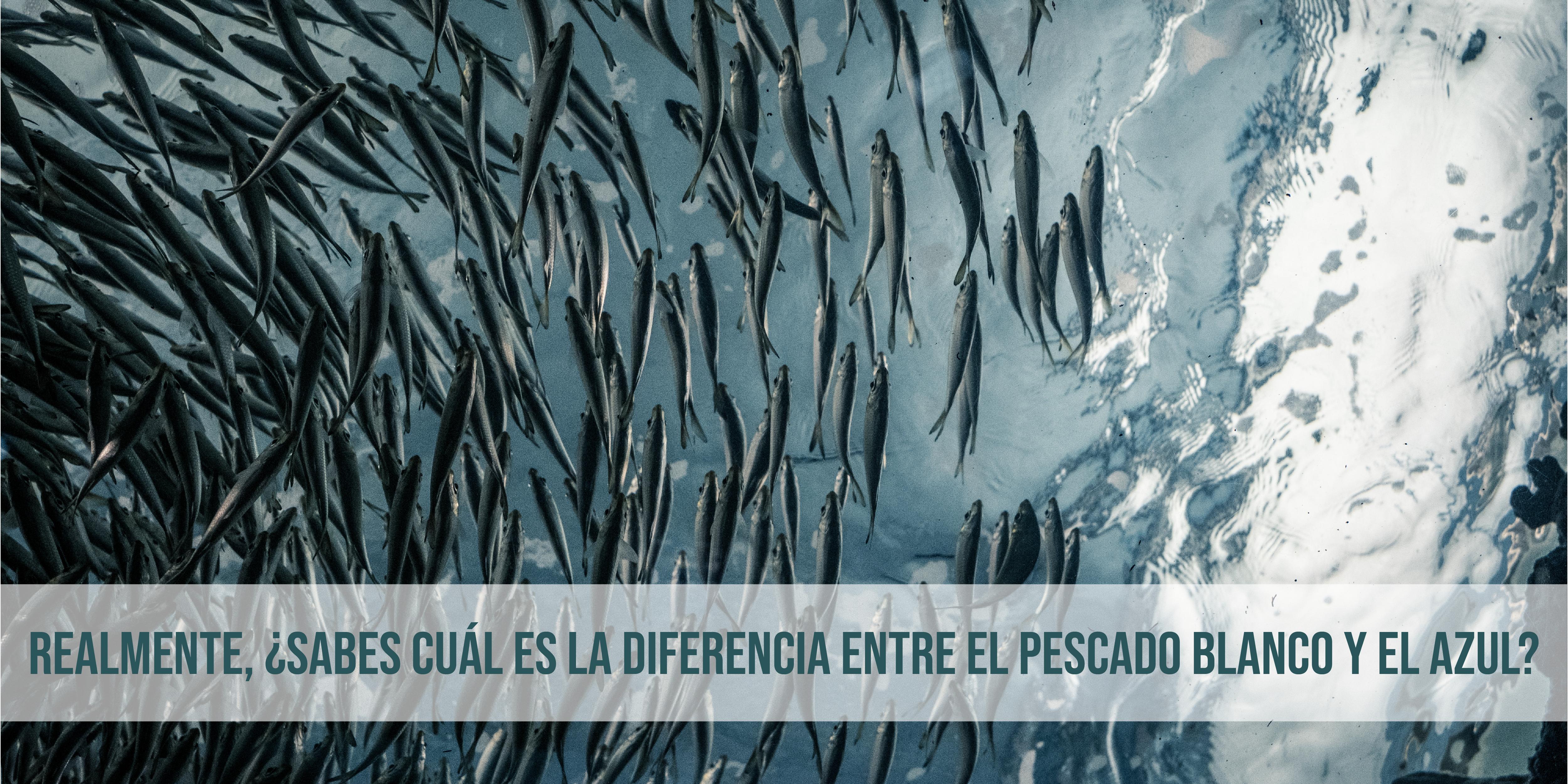 diferencia pescado blanco y azul